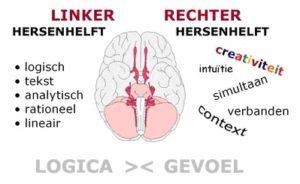Silva Methode_linker en rechter hersenhelft