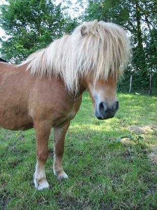Wervels paard_ligamentum nuchae hoofd omhoog