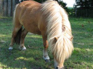 Wervels paard_ligamentum nuchae hoofd omlaag