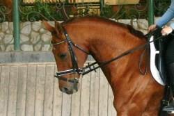 beweging thoracale wervelkolom paard_paard aan de teugel