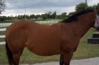 beweging thoracale wervelkolom paard_paard holle rug