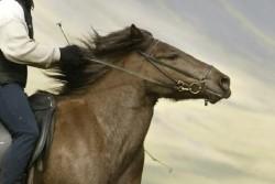 beweging thoracale wervelkolom paard_paard neus vooruit
