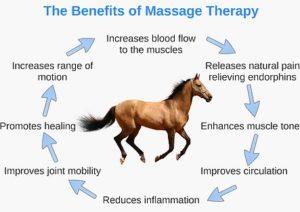 Voordelen sportmassage voor paarden