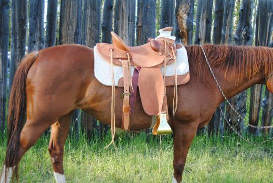 Beweging ribbenkast paard_western zadel