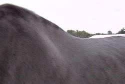 Musculus Rhomboideus paard_latissimus dorsi
