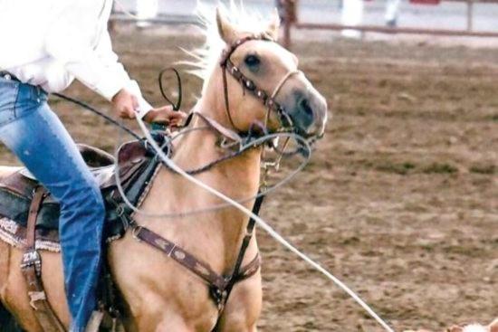 Musculus Rhomboideus paard_rope horse