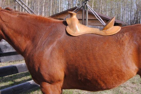 Serratus Ventralis paard_zadelboom