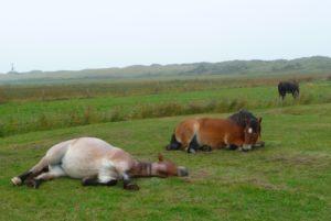 Lichaamswerk voor paarden_ontspannen paard