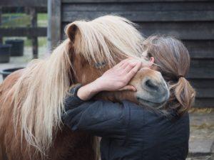 Therapeut voor paarden_Masja Fick