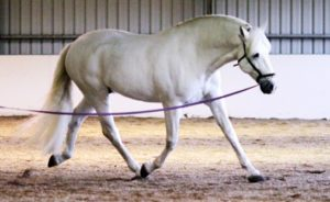 Biomechanica paard
