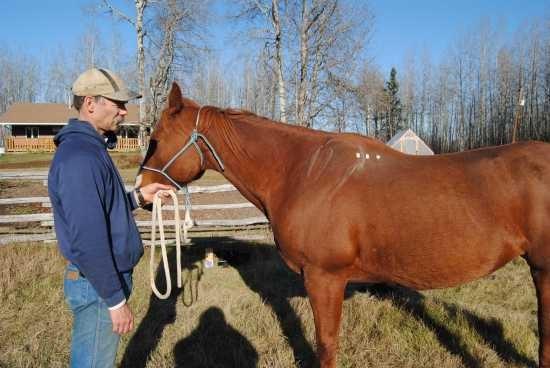 Beweging van het schouderblad paard_beweging scapula