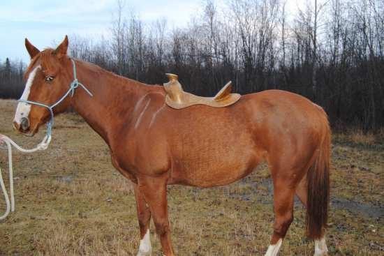 Beweging van de schouderbladen en pasvorm van het zadel_paard