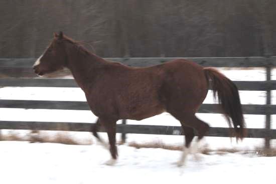 Beweging van het achterbeen van het paard_biomechanica draf 2
