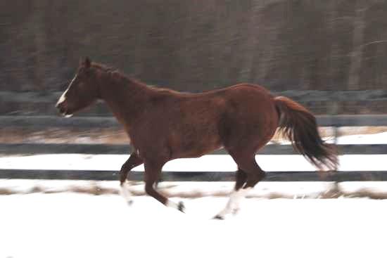 Beweging van het achterbeen van het paard_biomechanica galop 1