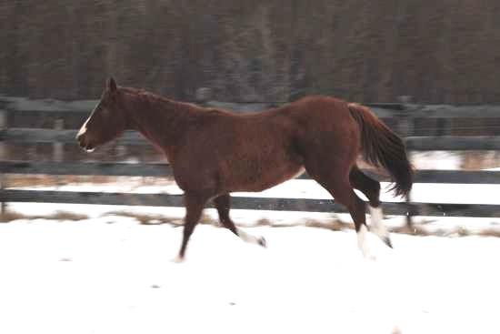Beweging van het achterbeen van het paard_biomechanica galop 2