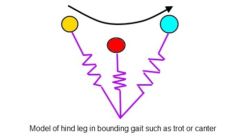 Beweging van het achterbeen van het paard_draf galop patroon