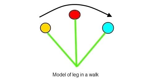 Beweging van het achterbeen van het paard_stap patroon