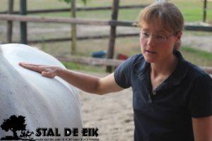 Workshops paard_paard ontspannen