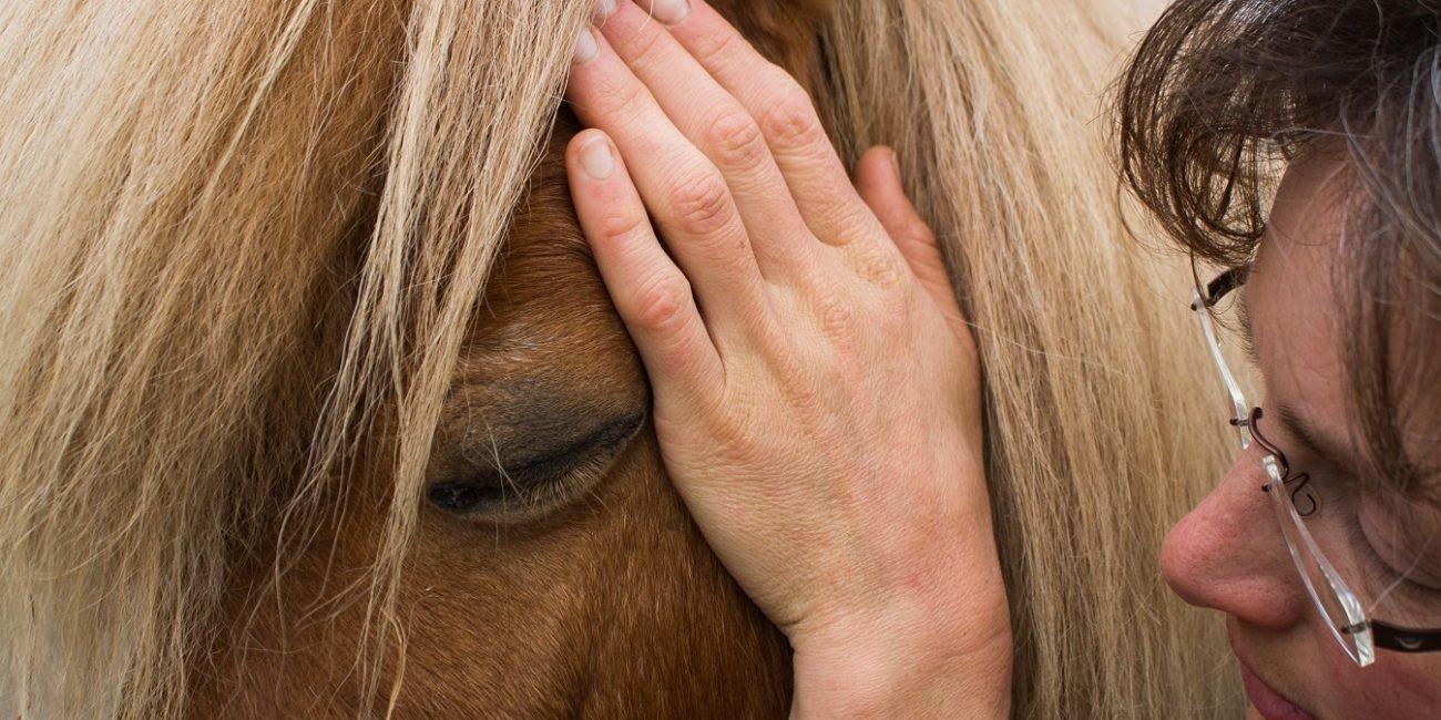 Masja Fick_cranio sacraal therapie voor paarden