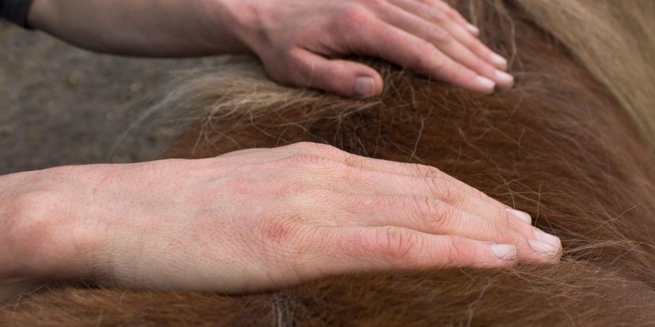 Masja Fick_osteopathie voor paarden