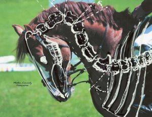 Paard_gebroken nek C2_C3