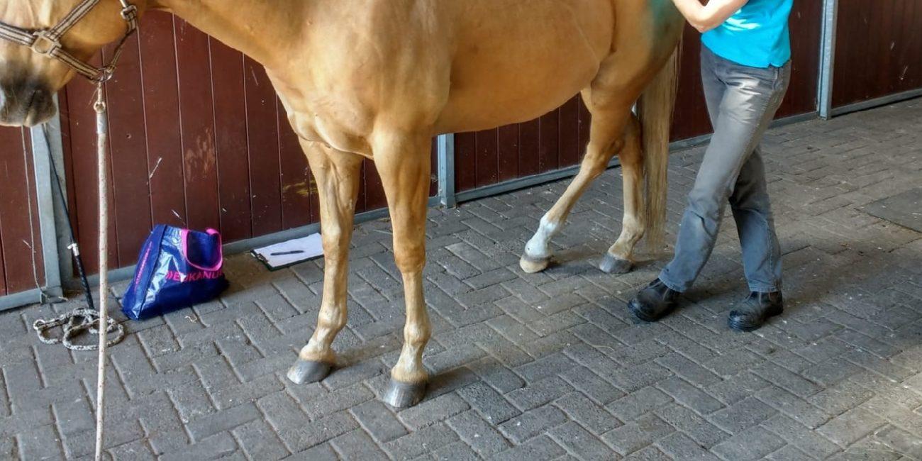 Masja Fick_Behandeling paard
