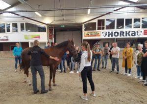 Presentatie paard behandelen