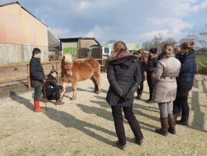 Workshop_Reactie paard zachte aanraking