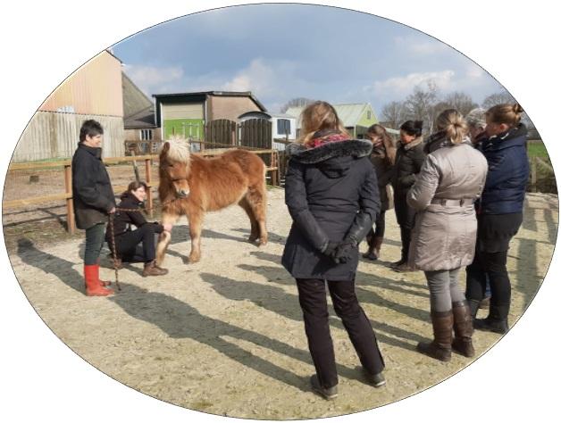 Workshops-en-presentaties_paard