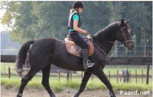 Blokkade paard_paard uit balans draf