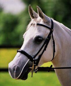 Headshaking paard hoofdschudden_neusnetje