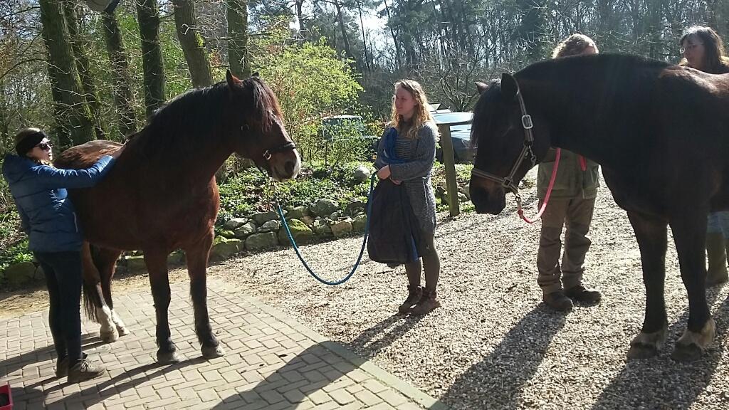 Aanmelden workshop De reactie van het paard op zachte aanraking