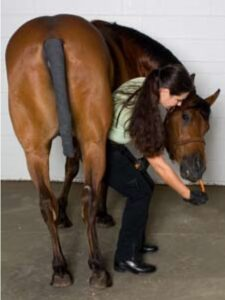 Carrot stretches_paard core stability
